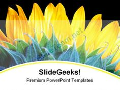 Sunflower Beauty Nature PowerPoint Backgrounds And Templates 1210 #PowerPoint #Templates #Themes #Background