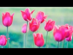 Learn to Paint Easy TULIPS Acrylic Painting Tutorial LIVE!