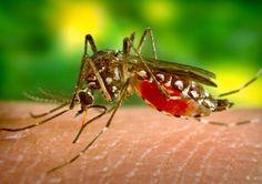 Après l'examen de sang, pour le diagnostic de la malaria, voici que le Nigérian Eddy Agbo rendu célèbre par le prix africain de l'innovation m