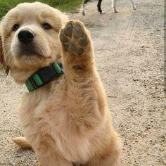 High paw!