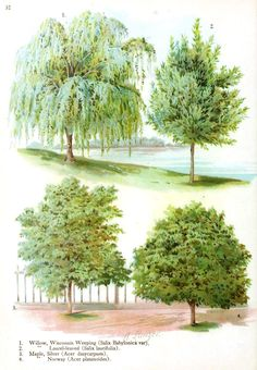 Botanical - Trees - Tree types 5