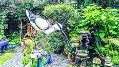 An ibis in my quirky wee garden.
