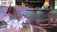 เพื่อวันเวลาดีดีในวันพักผ่อนของคุณที่ ปิงปาลีย์ รีสอร์ท กาญจนบุรี