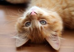 Ginger Relaxing by Colin Hunter on 500px