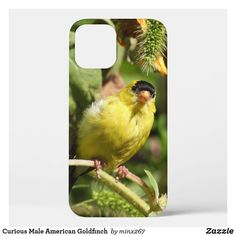 Curious Male American Goldfinch Case-Mate iPhone Case Sunflower Leaves, Unique Iphone Cases, Goldfinch, Wildlife Nature, Design Products, Plastic Case, Photographs, Lovers, Birds