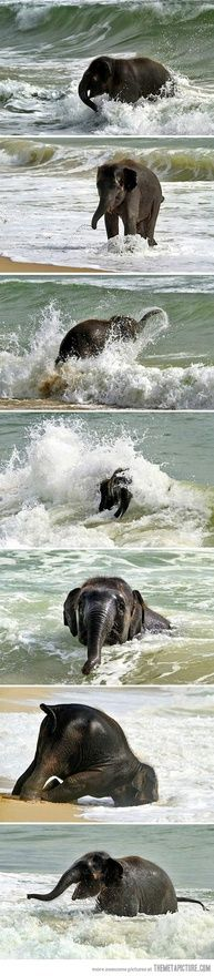 Baby elephant meets the sea for the first time. sooooo happy!!