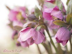 Blumenbild: Frühlingserwachen mit aller Macht.