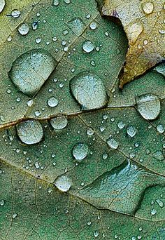 Rain drops, close-up photography by Mike Moats.