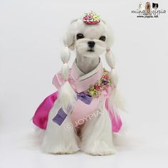 Maltese Cut Styles | Puppy Cuts - Page 5 - Maltese Dogs Forum : Spoiled Maltese Forums