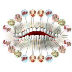 How Your Teeth Predict Different Organs Health! There is a link between the state of organs inside and teeth, like for example the upper and lower incisors a. Health Heal, Health And Wellness, Health Tips, Hand Reflexology, Acupressure Treatment, Tooth Pain, Body Organs, Alternative Health, Dental Health