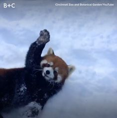Proof That Animals Love to Play In the Snow as Much as We Do