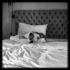 #Bulldog missing her best friend away at college. #LoveThatKid #Bulldogs #Dogs #wakeforest