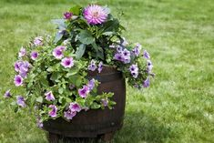 It's time to brighten your plants' collection with more cute pots garden ideas. Some of our recommendations are listed here, so check it out! Nemesia Flowers, Euphorbia Flower, Herb Pots, Garden Pots, Garden Ideas, Wheel Barrel Planter, Colorful Flowers, Beautiful Flowers, Garden Types