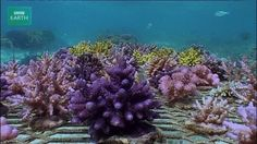 Marine Science in a Drop — In Fiji, scientists are working with fishermen to...