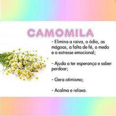 Espaço Holístico COISAS D'ALMA Fernanda Tomaz: Chá de Camomila