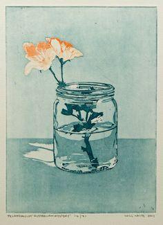 Pelargonium, etching by William White