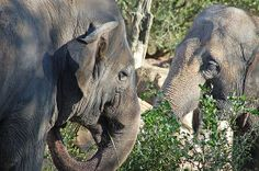 Title  Two Elephants   Artist  Aimee L Maher   Medium  Photograph - Photographs