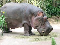 Jijamata Udyaan Zoo - in Mumbai, Maharashtra, India.