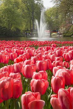 Keukenhof, the most beautiful spring garden in the world!