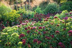 In Your Garden Today