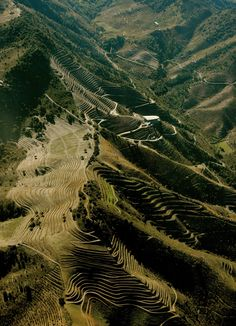 Steep Terraced hillsides make Priorat a region where most vineyards are hand harvested