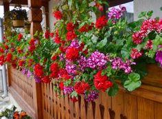 Cum împiedicăm viespile să vandalizeze via și livada Flower Names, Paradis, Salvia, Home And Garden, Outdoor Structures, Patio, Flowers, Green, Gardening