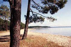 Le Lac, Biscarrosse