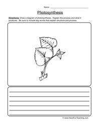 Photosynthesis Worksheet 2016: Photosynthesis Worksheets Elementary #1   Fun School Activities    ,