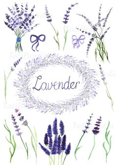 Handdrawn watercolor lavender clip art: - contains 15 elements, each in separate .png file - one wreath (made from elements) - each image is 300 dpi Lavender Crafts, Lavender Flowers, Clipart, Watercolor Flowers, Watercolor Paintings, Art Flowers, Lavender Tattoo, Bullet Journal Art, How To Make Wreaths
