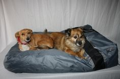Gabriele Zechel - Hundekörbe, Le - Hundekissen aufblasbar grau Happy House grau in 2 Grössen www.gabriele-zechel.de