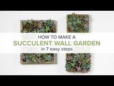 how to make a succulent wall garden - My French Twist
