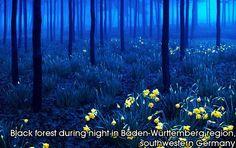 Black forest during night in Baden-Wuerttemberg region, southwestern Germany
