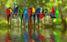 Birds Reflection In Water wallpaper – wallpaper free download