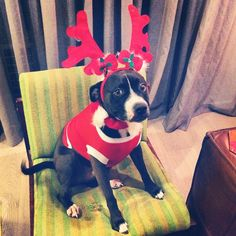 25 Pups Who Could Not Be More Ready to Meet Santa