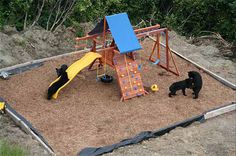 Bears Just Want to Have Fun! Photos of Bears on Kid's Playground in Alaska : TreeHugger