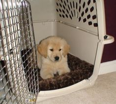 How To Potty Train A Puppy Completely In 7 Days