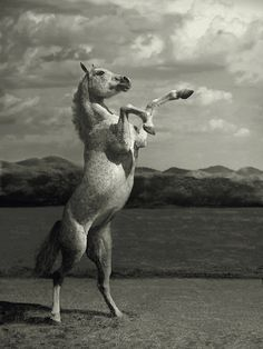 Amazing Photographs of Horses | 20+ pictures | See More Pictures | #SeeMorePictures