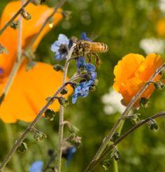 Johnnys bee food flower mix