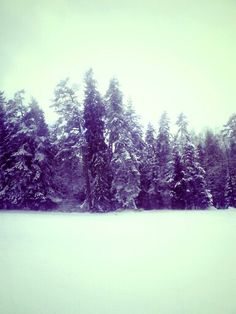 #Forest #Winterholiday