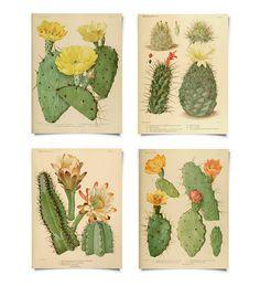"Vintage Botanical Cacti Print Set - 4 prints Original art from the text ""The…"