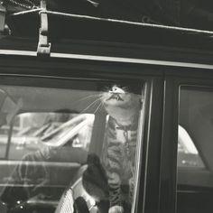 Self-portrait, Chicago area, 1966 by Vivian Maier