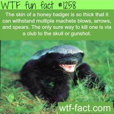 You think Honey Badger cares? Honey Badger don't give a shit.
