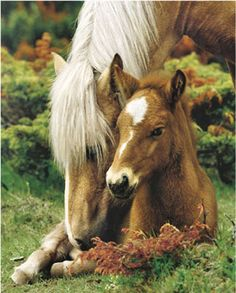 Mare and Foal II - Horse and her young @Corrie Commisso