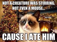 Grumpy Cat won't even get into the Christmas spirit ☼ Not a creature was stirring, not even a mouse . cause Grumpy Cat ate him! Grumpy Cat Quotes, Funny Grumpy Cat Memes, Cat Jokes, Animal Jokes, Funny Animal Memes, Funny Animal Pictures, Funny Cats, Funny Animals, Funny Memes