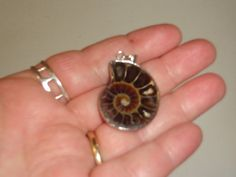 Genuine Ammonite Pendant Wrapped in Sterling by MoonwatersHaven Past Life Regression, Ammonite, Fossil, Silver Rings, Gemstones, Sterling Silver, Pendant, Jewelry, Jewlery