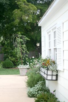 Window Boxes - Summer Flowers, with herbs below