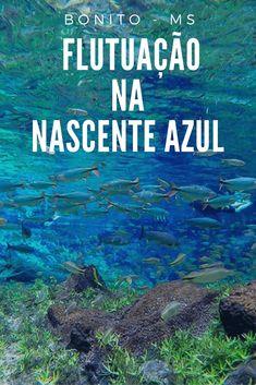 Bonito no Mato Grosso do Sul se destaca quando o assunto é flutuação, não deixe a Nascente Azul fora do seu roteiro de viagem nesse paraíso do ecoturismo no Brasil.