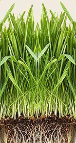 Chlorophyll for Pets - Benefits, sources & supplement dosage.