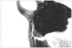 fidel12 | Fotografia de bollaz | Olhares.com