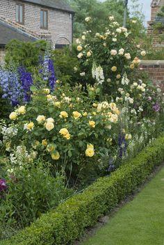 Graham Thomas & Crown Princess Margareta with Delphinium #DavidRoses #GardenRoses